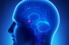 Amygdala ve Rasyonel Duygucu Yaklaşım